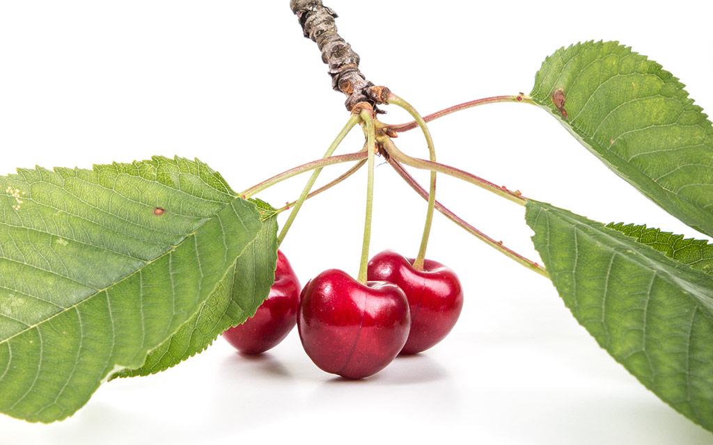 cherry-marketing-institute